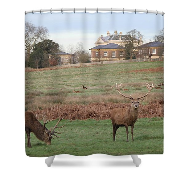 Stags In Richmond Park Shower Curtain