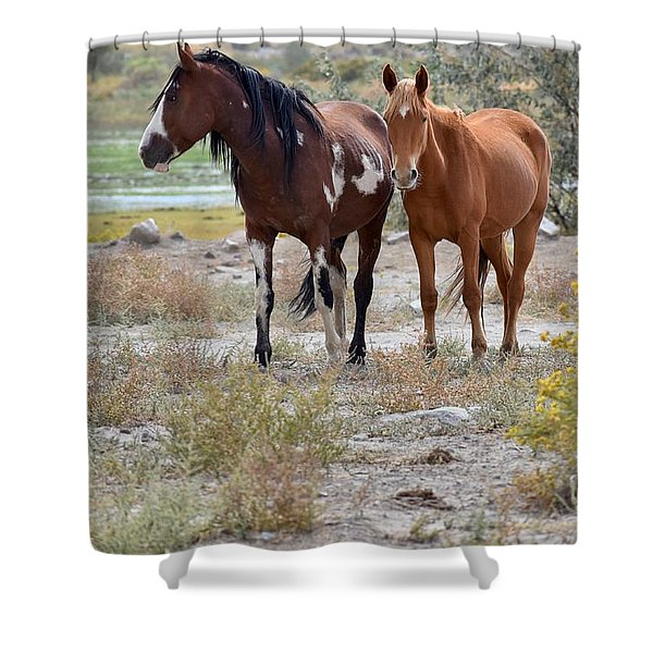 Stallion And Mare Shower Curtain