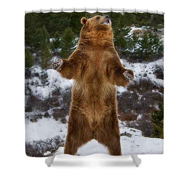 Standing Grizzly Bear Shower Curtain