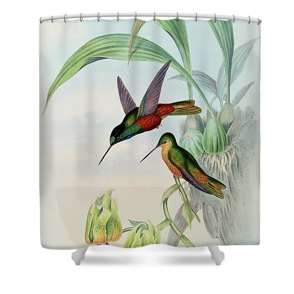 Star Fronted Hummingbird Shower Curtain
