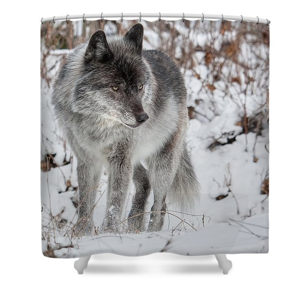 Staredown Shower Curtain
