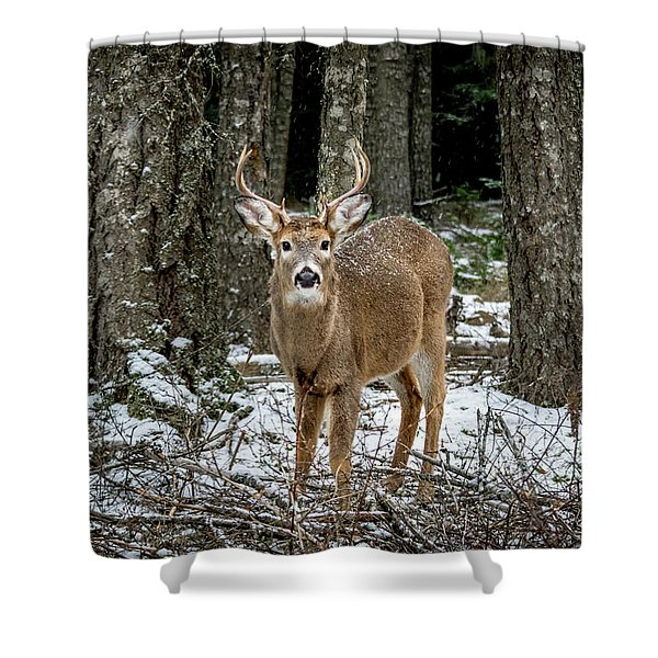 Shower Curtain featuring the photograph Staring Buck by Lester Plank