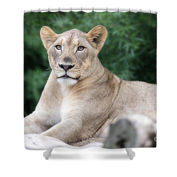 Staring Shower Curtain