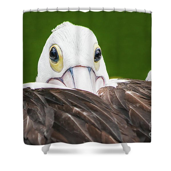 Staring Pelican Shower Curtain