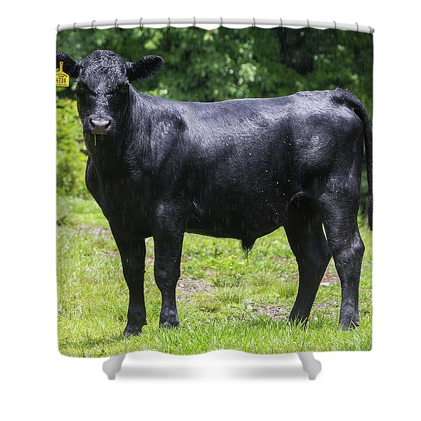 Staring Steer Shower Curtain