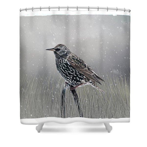 Starling In Winter Shower Curtain