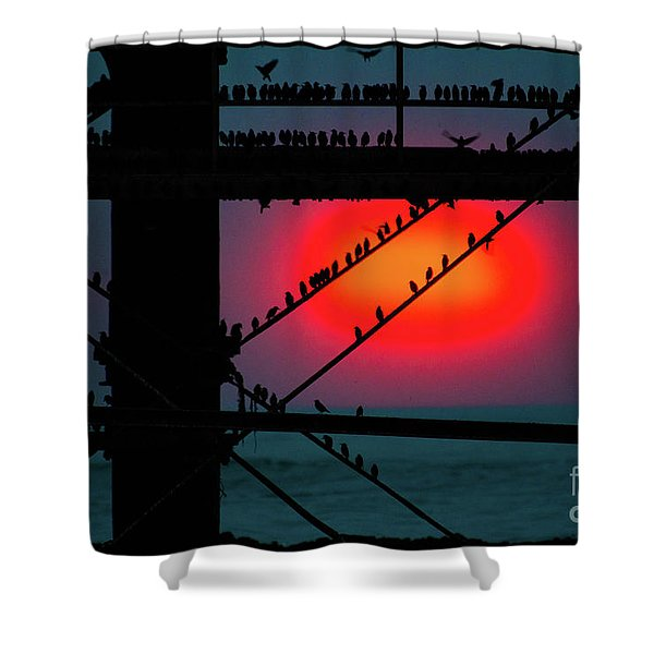 Starlings Against The Setting Sun Shower Curtain