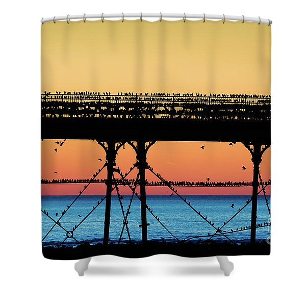 Starlings At Sunset In Aberystwyth Shower Curtain