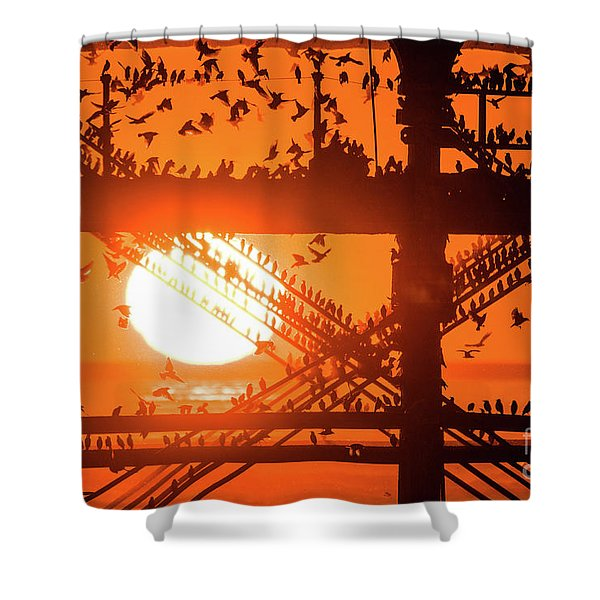 Starlings At Sunset Under Aberystwyth Pier Shower Curtain