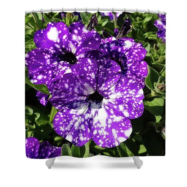 Starry Petunias... Shower Curtain