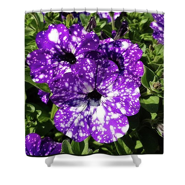 Starry Petunias... Shower Curtain