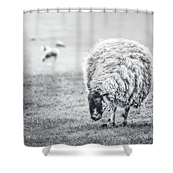 State Of Graze Shower Curtain