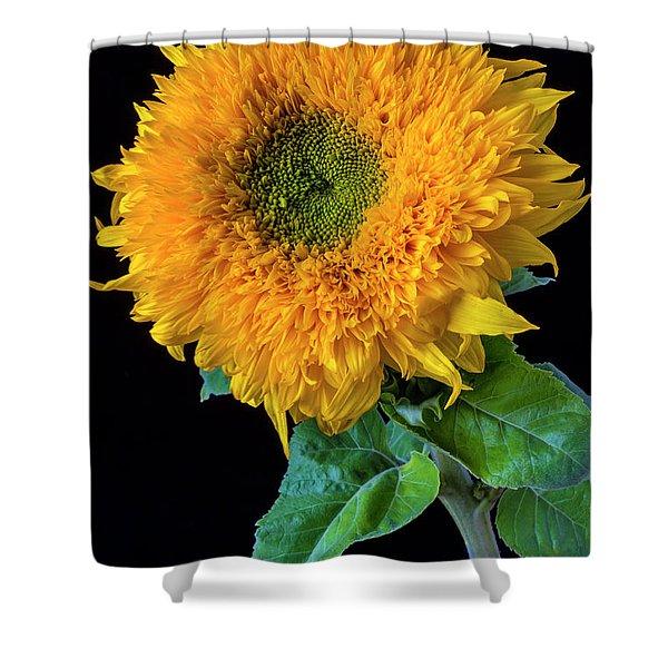 Stately Sunflower Shower Curtain