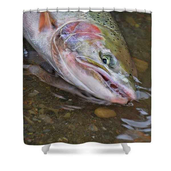 Steelhead  2 Shower Curtain