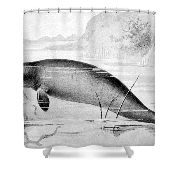 Stellers Sea Cow, Extinct Shower Curtain