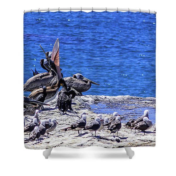 Pelican Sticking His Neck Out Shower Curtain