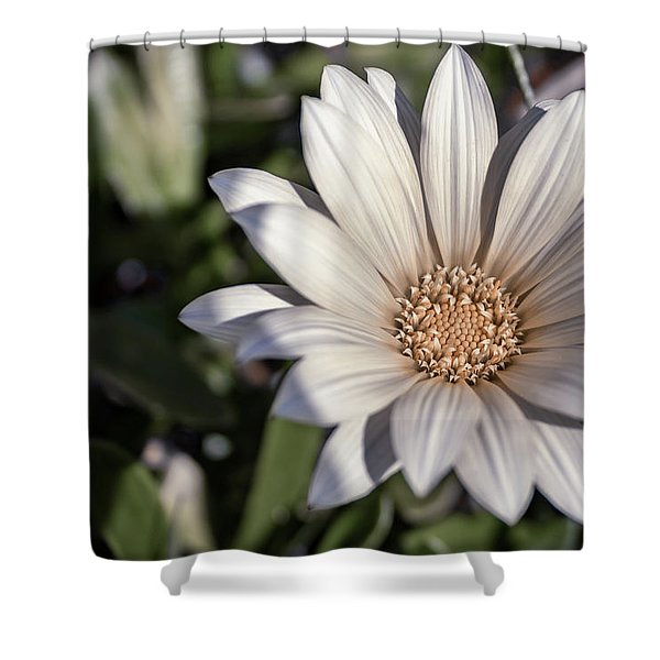 Still Dreaming Shower Curtain