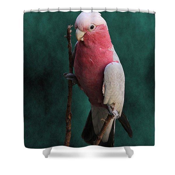 Stiltwalker - Roseate Cockatoo Shower Curtain