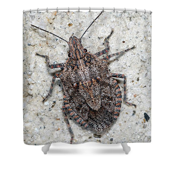 Stink Bug Shower Curtain