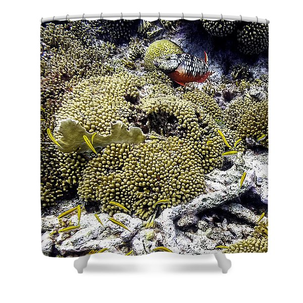 Stoplight Parrotfish And Yellow Chromis Shower Curtain