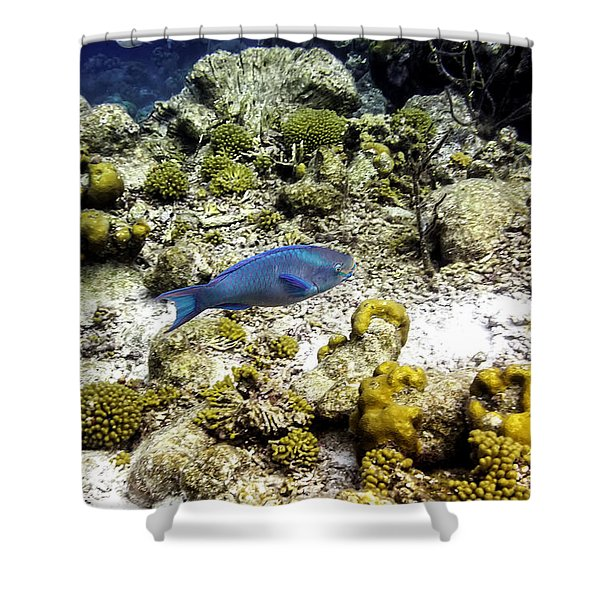 Shower Curtain featuring the photograph Stoplight Parrotfish  by Perla Copernik
