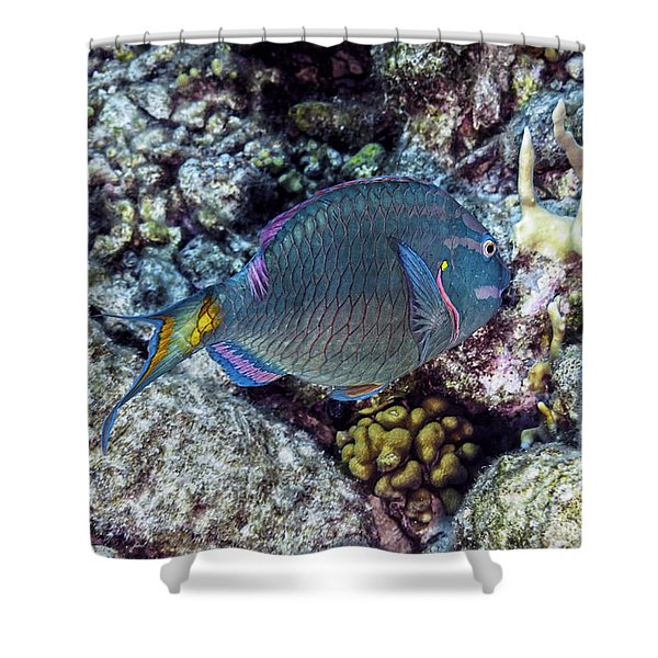 Shower Curtain featuring the photograph Stoplight Parrotfish Terminal Phase by Perla Copernik