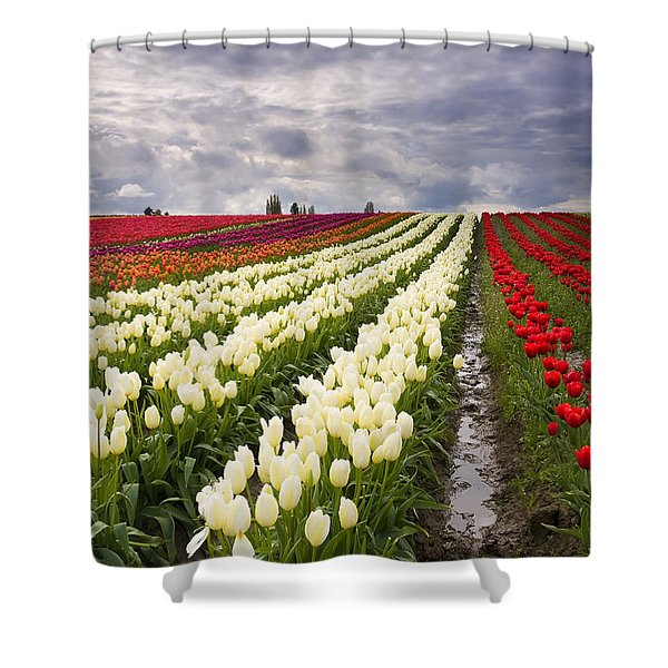 Storm Over Tulips Shower Curtain
