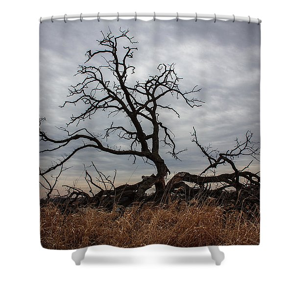Storms Make Trees Take Deeper Roots  Shower Curtain