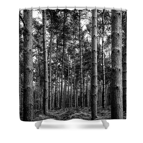 Shower Curtain featuring the photograph Straight Up by Nick Bywater