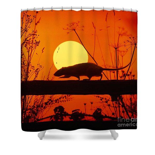 Stranglers Rattus Norvegicus Rat Shower Curtain