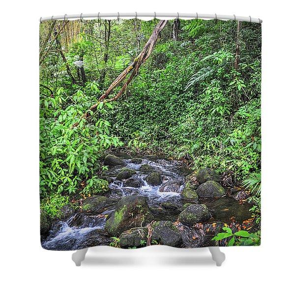 Stream In The Rainforest Shower Curtain
