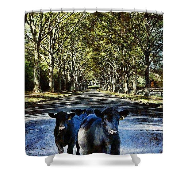 Street Cows Shower Curtain