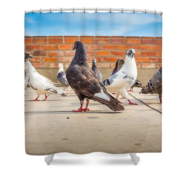 Street Pigeons. Shower Curtain