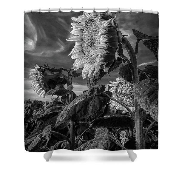Strength Of A Sunflower Shower Curtain