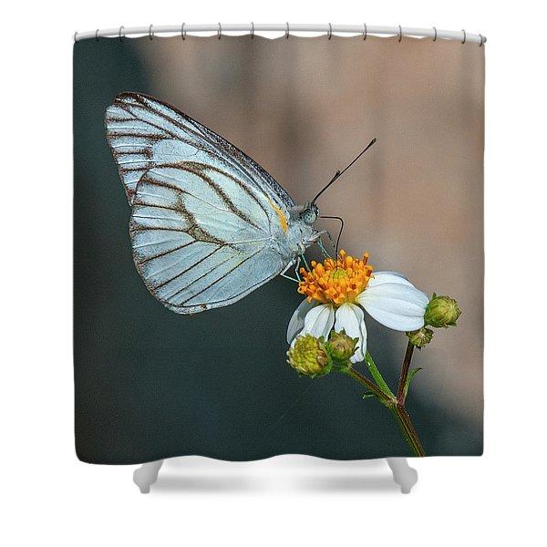 Striped Albatross Butterfly Dthn0209 Shower Curtain