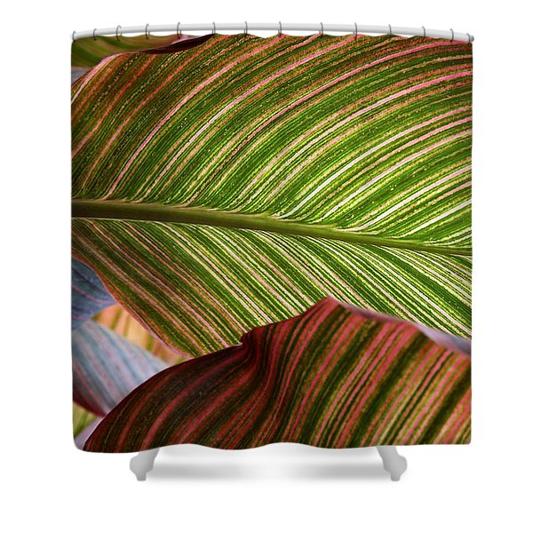 Striped Canna Lily Leaves Shower Curtain