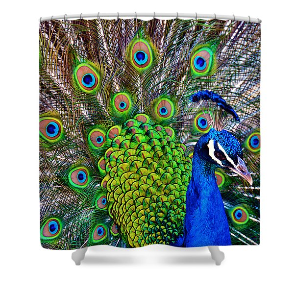 Strut Shower Curtain