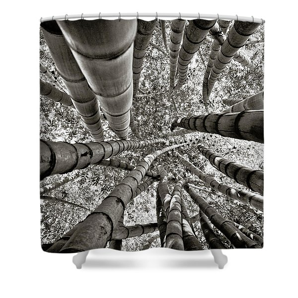 Stunning Bamboo Forest Shower Curtain