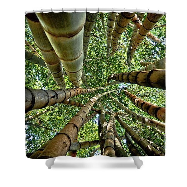 Stunning Bamboo Forest - Color Shower Curtain