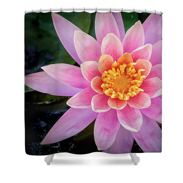 Stunning Water Lily Shower Curtain