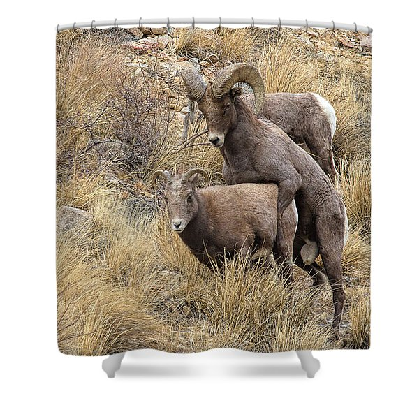 Committed To The Cause Shower Curtain