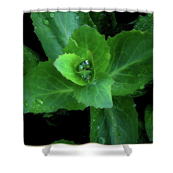 Succulent After The Rain  Shower Curtain