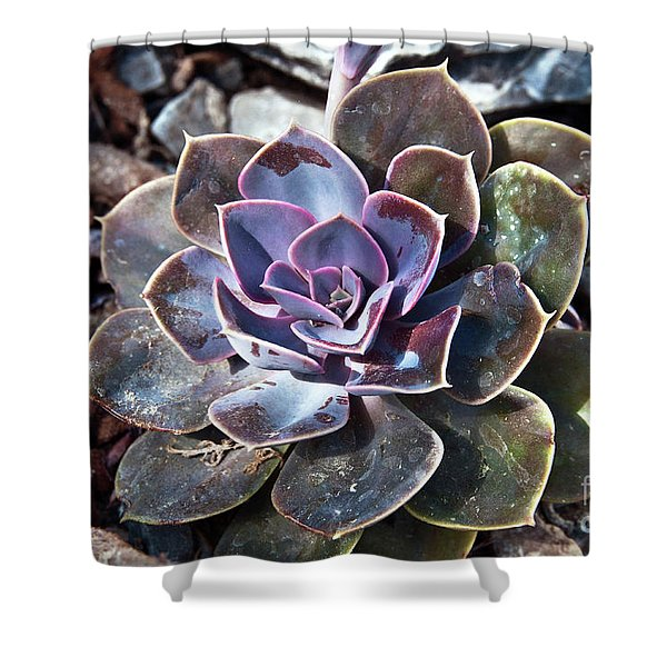 Shower Curtain featuring the photograph Succulent Plant Poetry by Silva Wischeropp