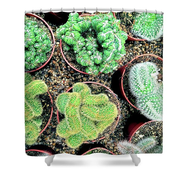 Succulents And Cactus Plants In Pots Shower Curtain