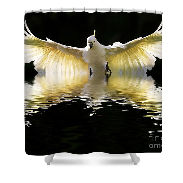 Sulphur Crested Cockatoo Rising Shower Curtain
