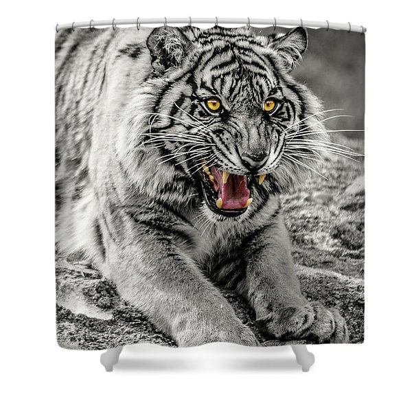Sumatran Tiger Bw W With Selective Color Shower Curtain