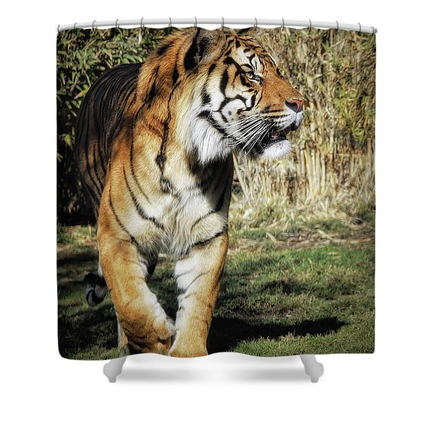 Sumatran Tiger  Shower Curtain
