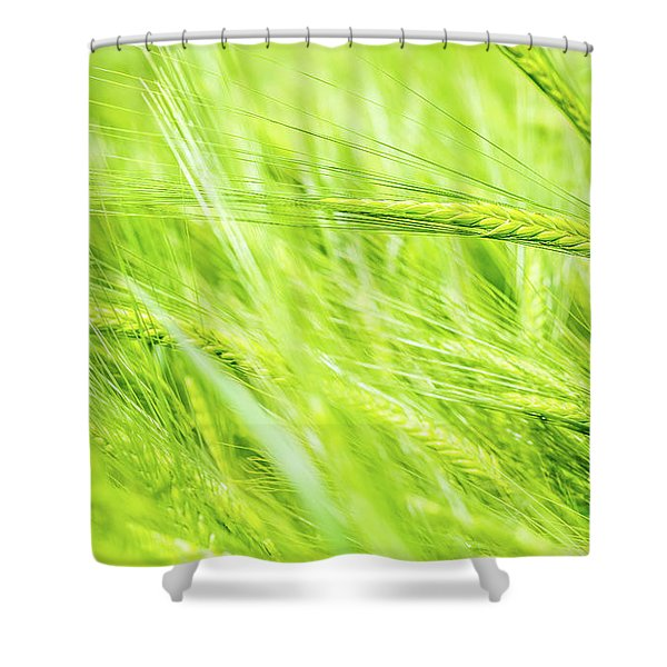 Summer Barley. Shower Curtain