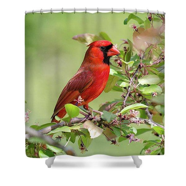 Summer Cardinal Shower Curtain