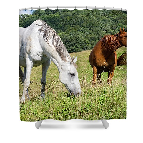 Summer Evening For Horses Shower Curtain
